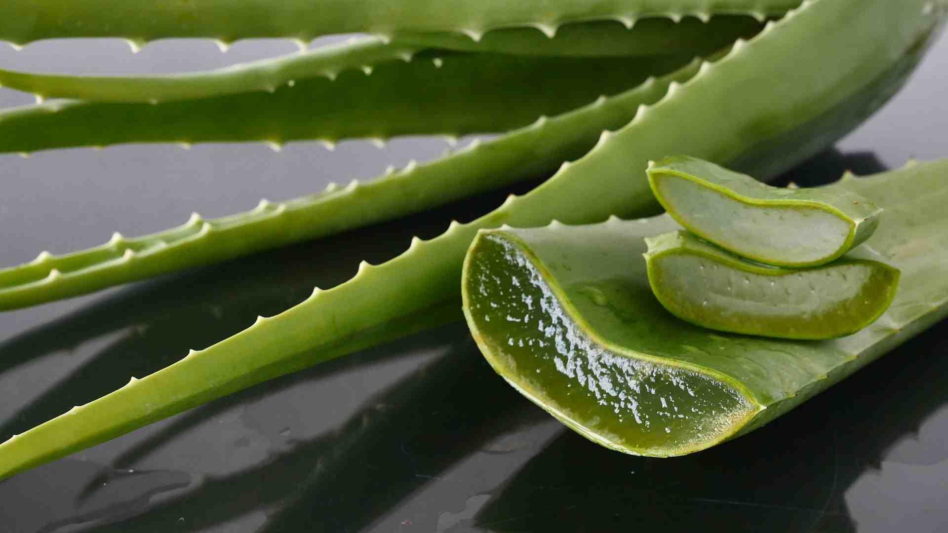 Benefits of Ayurvedic Aloe vera gel
